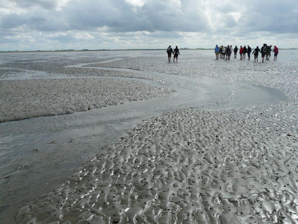 Wattenmeer Nationalpark Niedersächsischen
